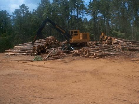 GEORGIA TIMBER AND LAND SALES AND APPRAISAL